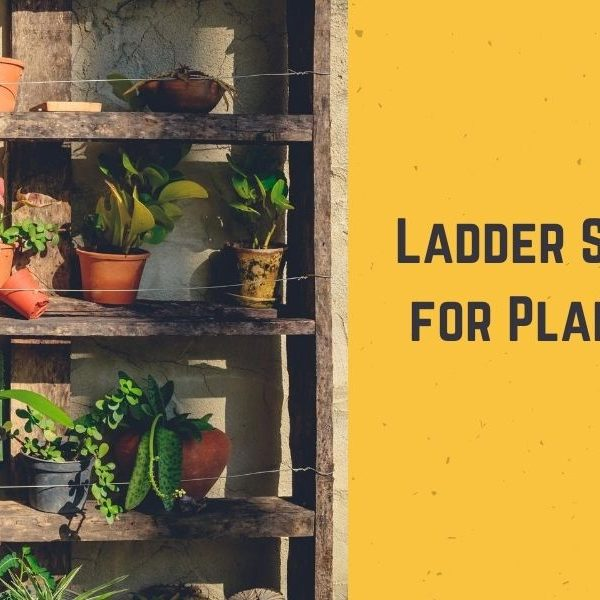 Top 10 Best Ladder Shelf for Plants in 2021 - Guide & Reviews